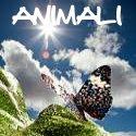 Immagini e foto di animali teneri e coccolosi