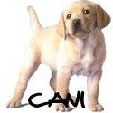 Immagini, foto e cartoline dei cani e cuccioli più belli della rete