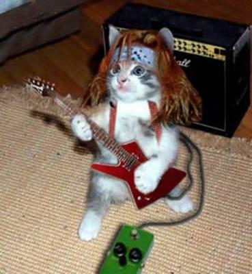 rock,micio