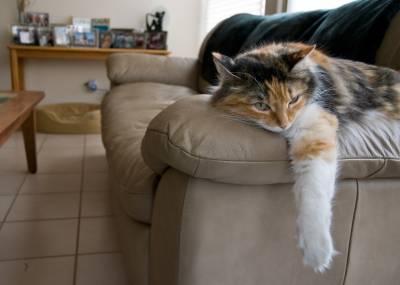 gatto, gattone, relax, riposo